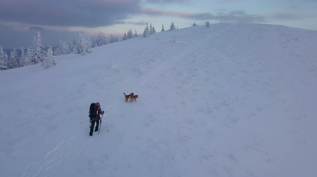 extreme : Aerial Men with dogs hiking in winter mountains at sunset