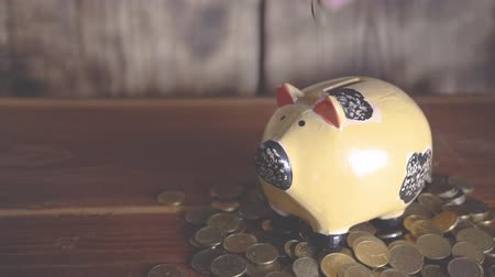 kumbara : Hand puts a gold coin in a piggy bank, in front of a scale of coins sorted to grow