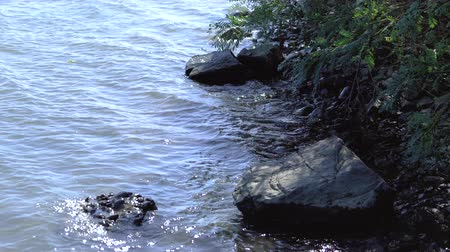 virgin forest : The waves on the Danube strike rocks
