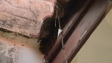 intruder : bee making nest under tile roof hole in home