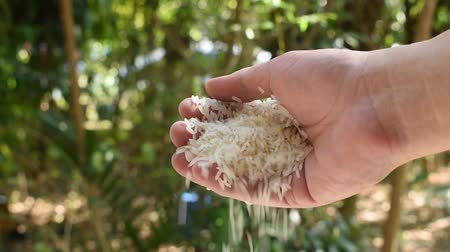 rice paddy falling from hand in garden Stok Video
