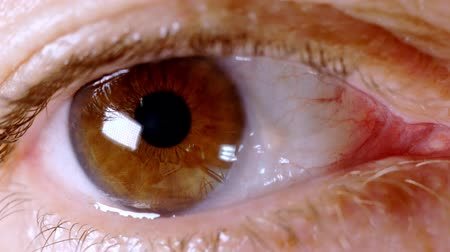Human brown eye of adult woman 4K UHD macro video