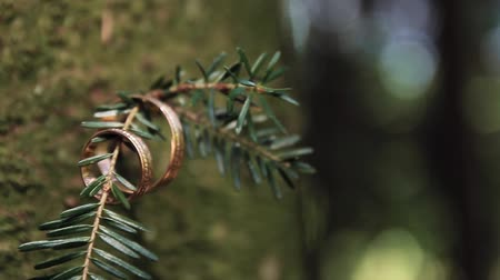 mohás : Wedding rings for the bride and groom in the nature in the open air close up on the tree.