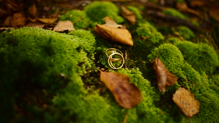 mohás : Wedding rings on green moss