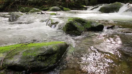 small cascades on the forest river among huge boulders covered with moss