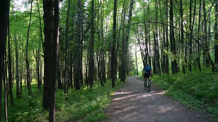 Cyclist rides along a forest road Stock Footage