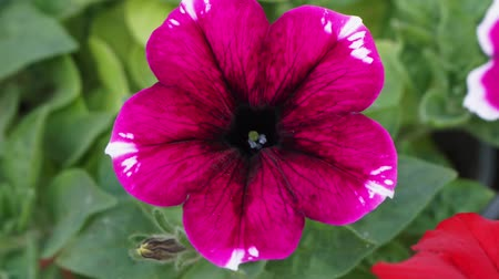 Bright pink-red flower close-up
