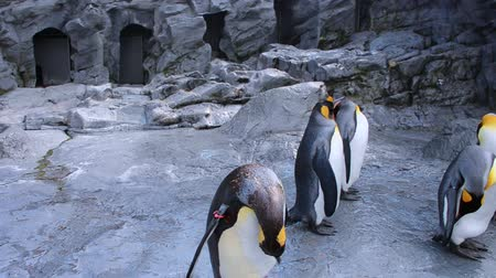 pinguim : Penguins flocks with various activities