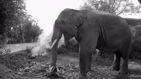 Eating Elephant in Monochrome