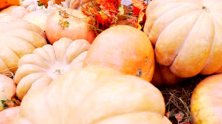 Beautiful fresh pumpkins at the thanksgiving fair