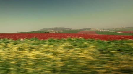 sarıcı : driving past strip of greenery and red field Stok Video
