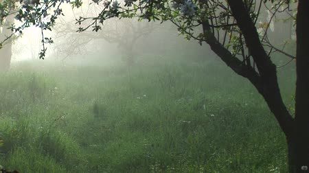 wicca : Misty Morning In The Backyard. Still And Quiet!