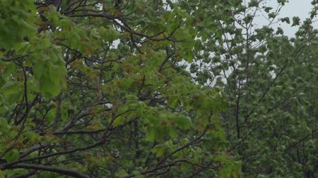 Wild Wind And Trees Stock Footage