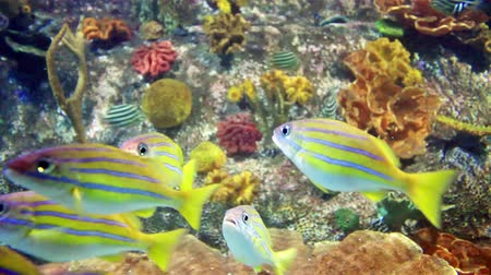 beautiful colorful fishes