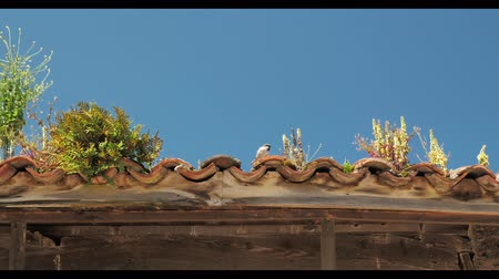 bird ecology : roof with green plants and bushes with a bird singing on it