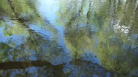 Tree reflection on river surface Stock Footage