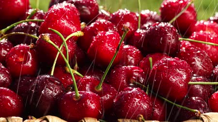 close up : Fresh, ripe, juicy cherries rotate. Red cherry clockwise
