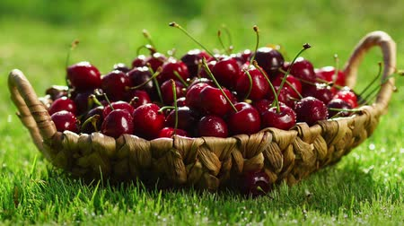 sports nutrition : Close-up of red cherry berries take a hand from a basket standing on the green grass