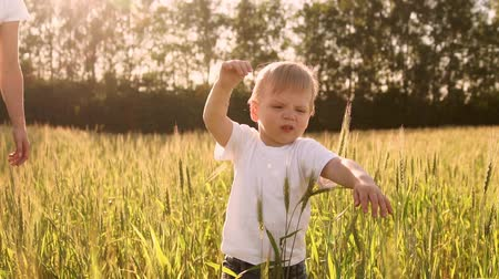 árpa : Boy in white shirt walking in a field directly into the camera and smiling in a field of spikes