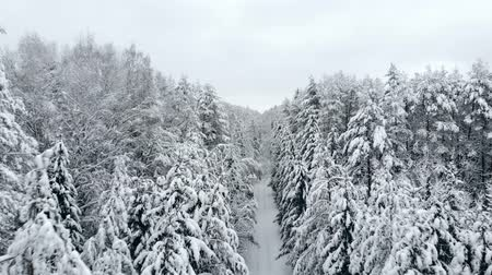 teplota : The Aerial camera flies over samnam pine forest in snow front view a little high. Cold temperature winter season