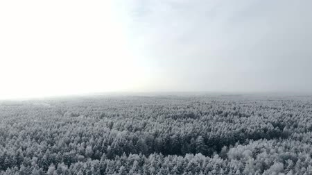 сибирский : aerial survey of winter forest