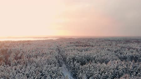 見落とす : Drone video of forest in Finnish Lapland, above the Arctic Circle in winter 動画素材
