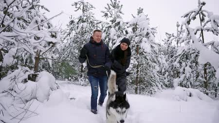 сибирский : People on a walk in the forest. A man and a Siberian Husky dog are pulling a sleigh with a child in the snow in the forest. A woman is walking in the forest