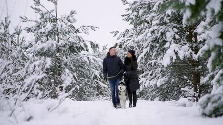 ハスキー : Man and woman walking with Siberian husky in winter forest 動画素材