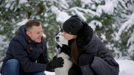 husky : Beautiful family, a man and a girl in winter forest with dog. Play with the dog Siberian husky.