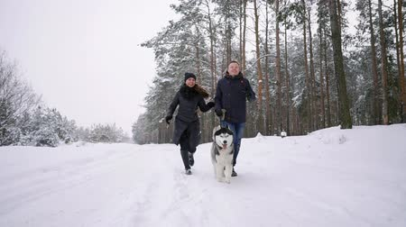 ślady stóp : People on a walk in the forest. A man and a Siberian Husky dog are pulling a sleigh with a child in the snow in the forest. A woman is walking in the forest