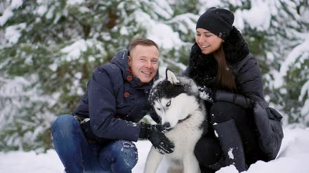 boynuzları : Family portrait of cute happy couple hugging with their alaskan malamute dog licking mans face. Funny puppy wearing santa christmas deer antlers and kissing woman. Freedom lifestyle pet lovers. Stok Video