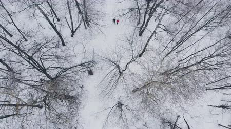 cold desert : A man and a woman run in the winter through the woods training and doing their health. Morning Jogging, healthy lifestyle. Aerial