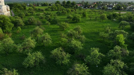 münchen : Summer air view of the Apple orchard and the castle with an ancient wall Stock mozgókép