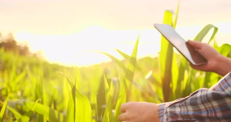 panoya : Farmer agronomist with tablet computer in bare empty field in sunset, serious confident man using modern technology in agricultural production planning and preparation. Stok Video