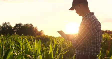 maquinaria : Lens flare: a Modern farmer with a tablet in his hands inspects corn shoots to analyze the future harvest and product quality. Farm management via Internet.