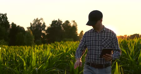 agronomist : Farmer man with tablet in field. Pretty young woman holding tablet in field at sunset.