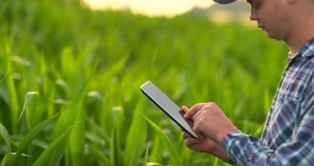çiftçi : Farmer using digital tablet computer, cultivated corn plantation in background. Modern technology application in agricultural growing activity concept. Stok Video