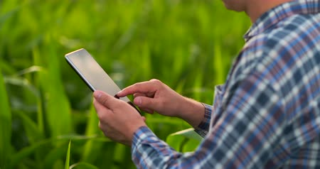 felülnézet : Middle plan side view: Male farmer with tablet computer inspecting plants in the field and presses his fingers on the computer screen in slow motion at sunset.