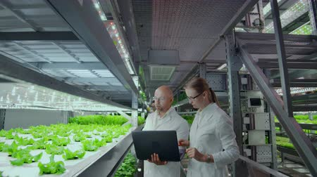 hydroponic : Group of modern scientists biotechnology scientist in white suit with tablet for working organic hydroponic vegetable garden at greenhouse.