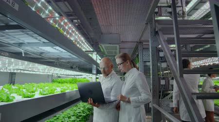 hydroponic : Modern farmers of the future monitor the growth of plants and grow pure non-modified natural products in vertical farms with hydroponics