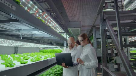 tápanyagok : Modern scientists are engaged in genetic engineering in the modern production of vegitarian products. Modern farm for automated production of vegetables.