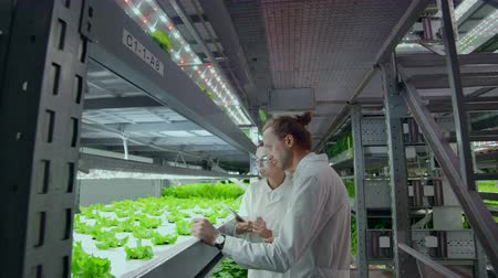 hydroponic : A group of scientists using modern technology to monitor the growth of healthy vegetables on an automated vertical farm with hydroponics system.