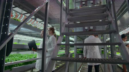 farmakologie : Agricultural Engineers Working in Plantation. Full length portrait of four modern scientists studying selection of vegetables in greenhouse of agricultural. Dostupné videozáznamy