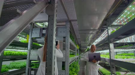 on site research : Scientists in white coats with a laptop and a tablet analyzes the work of a vertical farm to grow pure unmodified products in an automated farm. The camera moves on the site on gimbal