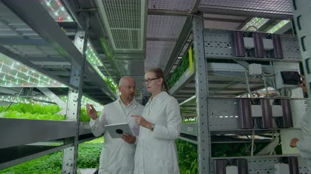 farmacologia : A man and a woman in white coats are on the modern laboratory of the future for growing salads and vegetables