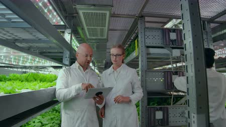 hydroponic : A group of engineers in white coats walk on the modern vertical farm of the future with laptops and tablets in their hands studying and discussing the results of the growth of green plants.