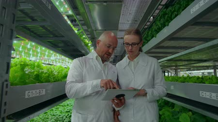 パプリカ : Genetic engineering. Doctors in white coats look and adjust the work of the vertical farm checking the plants and looking into the screens of tablets. 動画素材