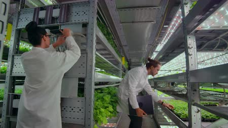 procesor : A group of people in white coats with a laptop and a tablet on a hydroponic farm contribute research data on vegetables to the data center for analysis and programming of plant irrigation