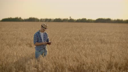 árpa : A man in a hat and jeans with a tablet in cancer touches and looks at the sprouts of rye and barley, examines the seeds and presses his finger on the touchscreen at sunset