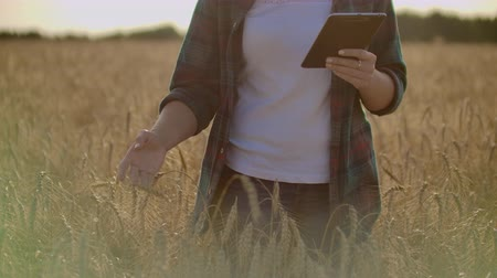 kepek : Close-up of womans hand running through organic wheat field, steadicam shot. Slow motion. Girls hand touching wheat ears closeup. Sun lens flare. Sustainable harvest concept